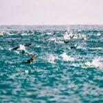 TRIrace 16 e 17 ottobre 2021 – Tricolori e Grand Prix a Lignano Sabbiadoro, tanti i big al Challenge Peguera Mallorca